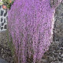 Blumenvorhang