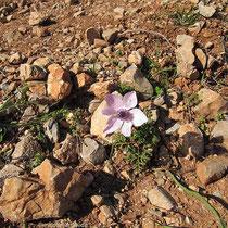 Hartes Blumen-Dasein