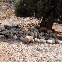 Kreta: Schäferidylle