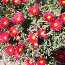 Naxos: Sonnenflügel am Tempeltor
