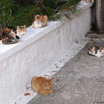 Katzenversammlung