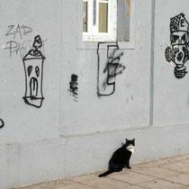 Katze mit Sinn für Motiv