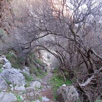 Tunnel aus Ästen