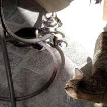 Kreta: Katzenbande