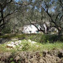 Hof im Olivenwald