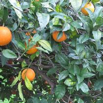 Und natürlich Orangen