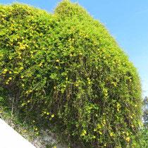 Blühende Wand