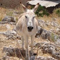 Chalki: Esel als wegelagerer