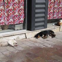 Keine schlafenden Hunde wecken!