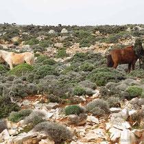 Pferde im Inselsüden
