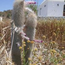 Merkwürdiger Kaktus