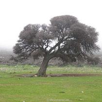 Toller Baum!