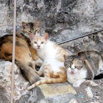 Katzen gibt es reichlich