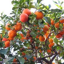 ...Orangen