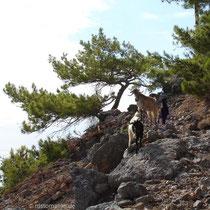 Kreta: Ohne Ziegen geht es nicht