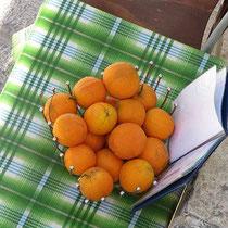 Lockende Orangen