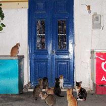 Die Katzen warten vor dem Laden