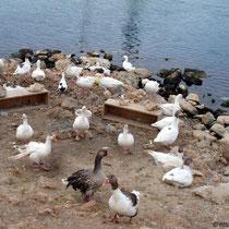 Kreta: Geflügel