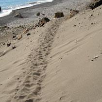 Kreta: Unsere Spuren im Sand