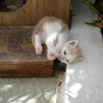 Folgandros: Kätzchen im Kastro