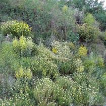 Grünes Ikaria