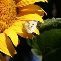 noch mehr Schmetterling