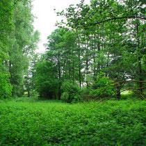 Blick in das Naturschutzgebiet