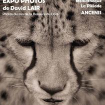 """"""" La bête humaine"""" - Ancenis (44) - 2015"""
