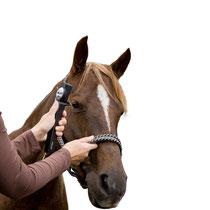 uporaba tonometra Icare Tonovet pri konjih (velike živali)