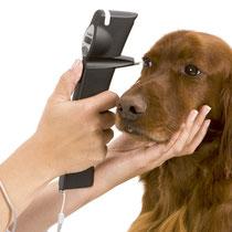 uporaba tonometra Icare Tonovet pri psih (male živali)