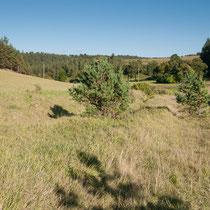 Südliches Jonastal, mesophiler Talgrund mit Böschungen zum Kalkmagerrasen,  15.09.2012