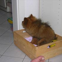 was macht sie denn da? bekomme ich gleich ein Leckerchen, wo ich doch sooo schön in meiner Kiste sitze?