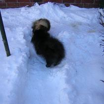 ab in den Schnee - das ist immer wieder ein Erlebnis !