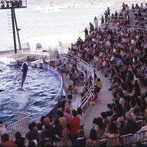 Eine Vorführung von Grossen Tümmlern kann durchaus einen edukativen Wert haben, besonders wie hier in Shimonoseki (Japan), wo man den Besuchern eindrucksvoll zeigen kann, dass diese Tiere hochspezialisierte Säuger und keine Fische (wie Thunfische) sind.