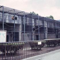 "Affen""gehege"" Zoo Kyoto (Japan), 1992"
