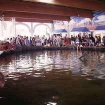 """Das ist ein """"Ray-pool"""" im Zoo von Atlanta(USA). Die Rochen in diesem Pool nehmen Futter der Besucher entgegen und lassen sich dabei berühren. Bisweilen lutschen sie mit ihren Sauglippen auch an den Findern der Besucher."""