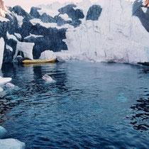 """Gehege der Belugas """"Weisswale"""" im Sea World von San Diego, USA. Das Gehege ist klimatisiert (das Eis ist echt). Die Tiere lassen sich auch unter Wasser beobachten."""