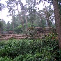 Gehege für Asiatische Elefanten im Burger's Zoo in Arnhem, NL.