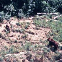 Kleiner Ausschnitt aus dem Braunbärengehege im Zoo Langenberg, CH