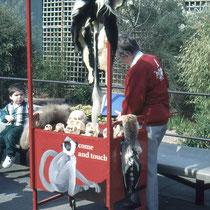 """In vielen Zoos gibt es auch sogenannet """"Info-Desks"""" oder Info-Stände, die oft mobil sind und wo freiwillige Mitarbeiter Auskünfte erteilen. Hier Im Zoo von Sydney (Aus.)"""
