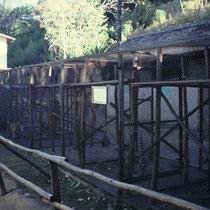 Haltung von Fingertieren (Aye-aye), Zoo Antanarivo, Madagaskar 1999