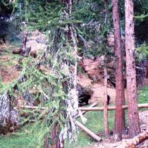 Schwarzbärenanlage im Zoo Marécottes, CH. Die Bären teilen das Gehege mit Kojoten.