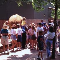 """Oft gehört e auch zum Pflichtenheft von Tierpflegern, den Besuchern allerhand Wissenswertes über ihre Schützlinge mitzuteilen (sog. """"Keeper's Talks""""). Hier beim Afrikanischen Elefanten ind Sydney (Aus)."""