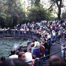 Seit vielen Jahren ist die Fütterung der Seelöwen im Zoo Basel, CH eine Attraktion, insbesondere auch, weil der initiative Tierpfleger diese Fütterung zu einer Show ausgebaut hat, wo die Seelöwen erlernte Tricks zeigen (= willkommene Besschäftigung!)n