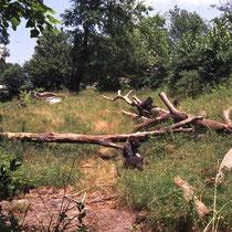 Aussengehege für Gorillas in Atlanta, USA  (es wurde als Regenwaldbiotop gestaltet)