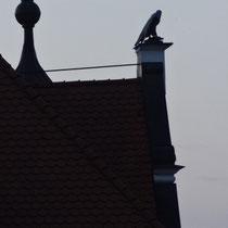Dach der Adlerapotheke. Die Apotheke befindet sich seit dem 13 Jhd. in diesem Haus