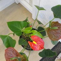 こちらは新しい葉と花が♪