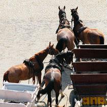 Von oben Blick auf die Pferdekutschen