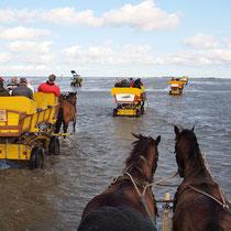 Wattwagenfahrt auf dem Rückweg steigt das Wasser schon wieder an