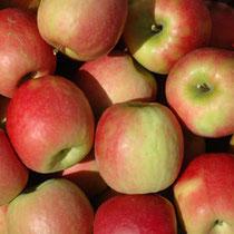 Lot de pommes Pink Lady